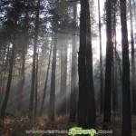 Мерки за възстановяване на горските пътища