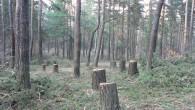 От 15 септември държавните горски и ловни стопанства, както и всички лица, на които е издадено позволително за сеч, са длъжни да информират кмета на съответното населено място за извършваната...