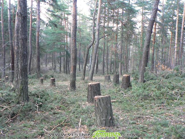 От 15 септември държавните горски и ловни стопанства, както и всички лица, на които е издадено позволително за сеч, са длъжни да информират кмета на съответното населено място за извършваната […]