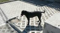 """В един двор с непостоянно обитавана къща се е настанила Бездомка, както реших да нарека женското куче, за което става въпрос по-долу. Казват, че тя имала и """"съквартиранти"""" в мазето..."""