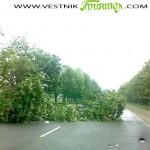 Паднало дърво препречваше пътя за София