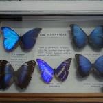 Природонаучна експозиция да има в Самоков