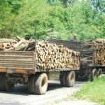 Конфискуваха камион с 3 кубика контрабандна дървесина