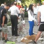 Кучета, костенурка и леопардов гекон превзеха площада