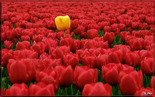 Съюзът на инвалидите в България – гр. Самоков съобщава на своите членове, че организира честване по случай 8 март – Международния ден на жената. Честването ще се проведе на 11 […]