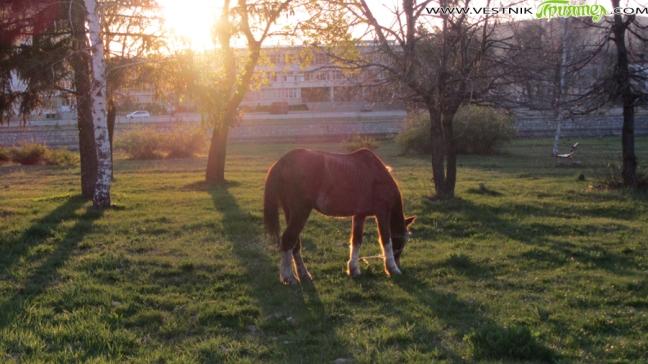 """439 дка пасище и 10 дка нива край Ковачевци бяха наети за 3612 лв. от фирма """"Ел Пасо"""". Фирмата се занимава с отглеждане на коне и кучета и ще използва […]"""
