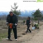 Дърводобивни фирми ще участват в залесяването