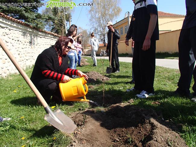 """Ученици от Професионална техническа гимназия """"Никола Вапцаров"""" засадиха на 26 април с голяма грижа и внимание млади фиданки пред Сарафската къща и Синагогата. Инициативата бе на Националния дарителски фонд """"13 […]"""