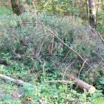 Специалисти и кметове обсъждаха опазването на горите