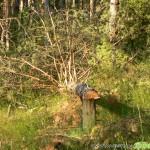Няма ли кой да спре опустошаването на гората над Бели Искър?
