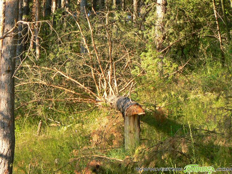 Кой ще ми каже какво става с гората на Пашаница? Река от… посечени вековни дървета. Сърцето ми плаче с кървави сълзи… Повече от десет години не се бях качвала на […]