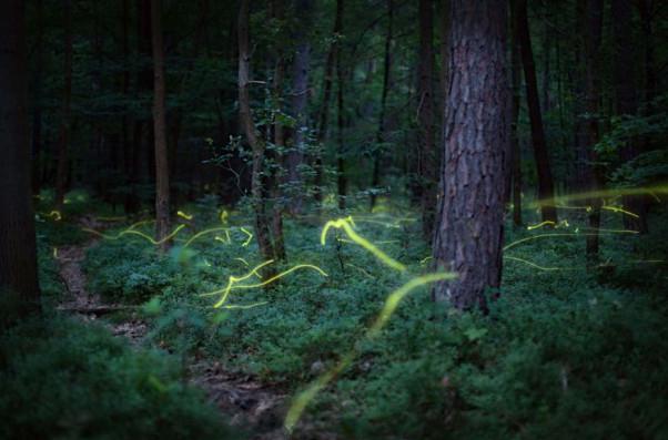 """""""Светулки се появиха! Наблюдавахме ги снощи на Ридо, в тъмното. От деца не бяхме виждали. Така им се зарадвахме…"""", споделиха вчера в редакцията съграждани. Появата на светулките посетителите ни си […]"""