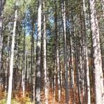 Поздравления за Седмицата на гората