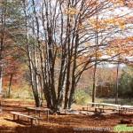 Молитва в есента
