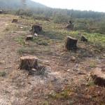 Спряха заради нарушения дърводелски цех в Марица