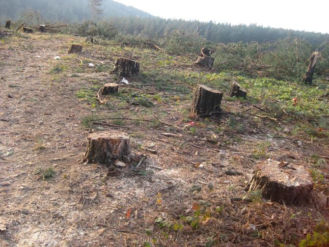 Дейността на цех за дървесина в Марица е спряна за нарушения от Изпълнителната агенция по горите и Регионална дирекция на горите – София. Внезапни проверки в общината са извършили на […]