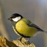1 април е и Международен ден на птиците