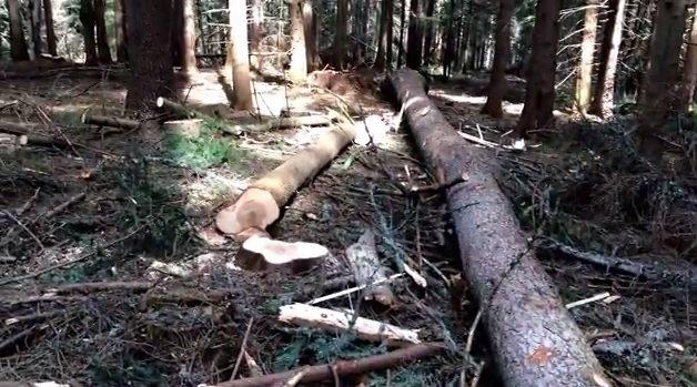 За периода от 1 януари до 30 юни т. г. са констатирани 86 нарушения по Закона за горите, се казва в писмо на директора на Общинското лесничейство инж. Георги Чапкънски […]