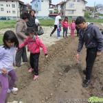Ученици садиха цветя и картофи, ще споделят продукцията наесен