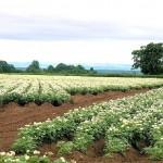 Картофите няма да достигат, а и цените им ще са доста по-високи