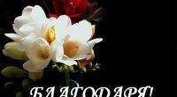 """От името на жителите на Гуцал и кметството благодаря на Кирил Димитров Василев, който на 18 септември дари сумата от 500 лв. за ремонт на покрива на черквата """"Възнесение Господне"""" […]"""