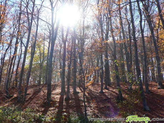 Повече от 4000 дка горски култури ще бъдат залесени до края на годината на територията на Югозападното държавно предприятие. През пролетта са засадени над 2100 дка в Благоевградска, Кюстендилска, Пернишка […]