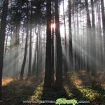Къщичка – светлик в гората