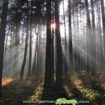 Горските в Югозапада са домакини на националното откриване на Седмицата на гората