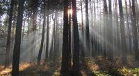 """Десетгодишнината на асоциация """"Общински гори"""" ще бъде чествана на 25 септември в нашия град. Тогава ще се състои и 11-ото общо събрание на асоциацията. Решението бе взето на заседание на […]"""