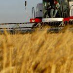 До 31 декември  физическите лица-земеделски стопани могат да изберат как да облагат доходите си през 2021 г.