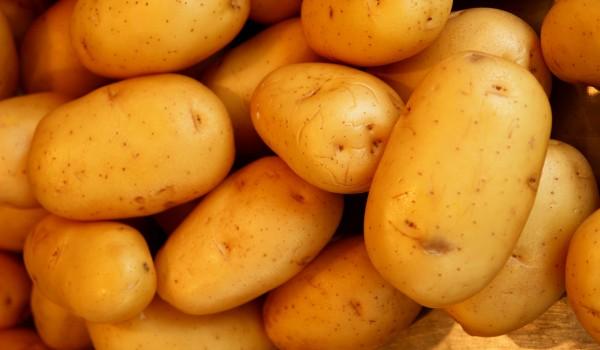 """""""Картофите са един от продуктите, които се консумират изключително много в ресторанти и хотели. Заради ситуацията в световен мащаб и в България хотелите и ресторантите в голямата си част бяха […]"""