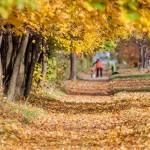 Приказка за златната есен
