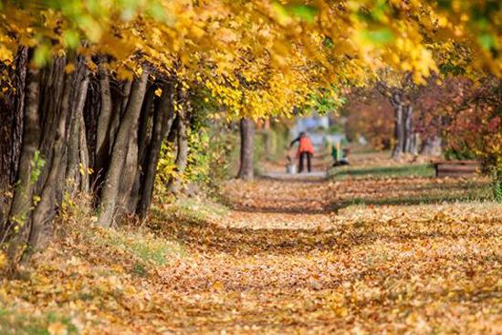 Тези октомврийски дни са невероятни. Истинска златна есен я наречете. Или сиромашко лято. Или циганско лято. Все бива… Слънцето грее и топли като че ли повече от дъждовното лято. След […]