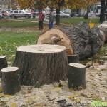 Дънерите на отсечени дървета ще стават масички и столчета /ВИДЕО/