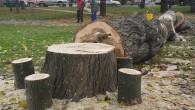 Общинска комисия от специалисти е набелязала за изсичане опасни стари дървета в града и селата. В градинката пред автогарата на 18 ноември бяха отрязани няколко стари тополи, за които имаше […]