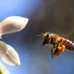 Финансова помощ за пчеларите