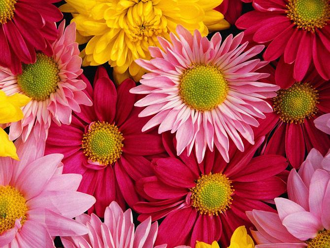 Уважаеми жени, Приемете нашите най-сърдечни поздрави по случай 8 март – Международния ден на жената! Самоковските жени са доказали, че имат амбицията и силите да воюват за по-добър живот на […]