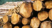 Общо 5 каруци и 7.5 куб. метра строителна дървесина са задържани от служителите на самоковското Горско стопаство при извършваните денонощни дежурства. Последният случай на незаконна сеч и транспортиране на дървесина […]