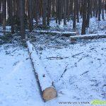 Нарушенията в горите намаляват, но все още са доста