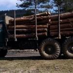 """Изсекли дървета за 780 тира от """"царските"""" гори в Рила"""