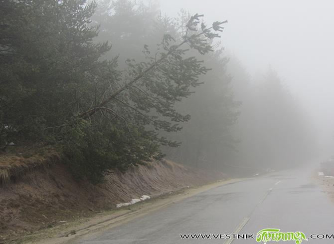 Надвисналите над пътя опасни дървета ще се изсекат, съобщиха от общинската администрация. С представители на държавното горско стопанство и на Общинското лесничейство е направен във връзка с това предварителен оглед. […]