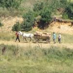 Бракониери шетат от Ридо до Окол – кой ще ги спре?