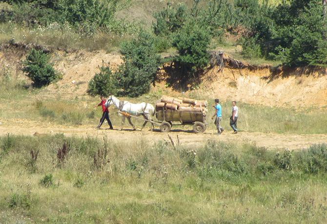 Бракониер и три коня бяха задържани край Самоков при съвместни акции на горски служители, жандармерия и полиция. На 2 март близо до една от ромските махали проверяващите засекли хора, които […]