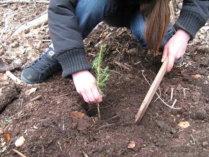 От 11 ч. в събота, на 1 април, започва с акция на Ридо тазгодишната местна кампания по залесяване. Поводът е Седмицата на гората, която по традиция се отбелязва в първите […]