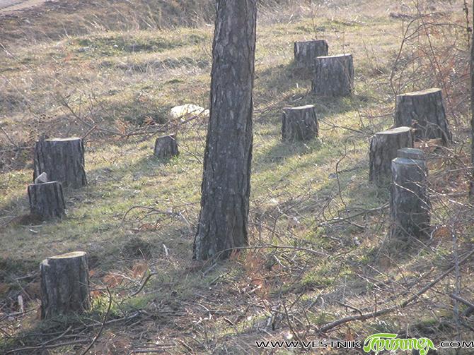 През март м. г. в РУП-Самоков се получил сигнал от мобилно звено на държавното горско стопанство, че при извършване на обход техни колеги са нападнати с вериги и камъни от […]