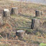 Незаконна сеч беляза и горите край Говедарци