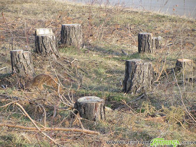 В района на Държавното горско стопанство – Самоков в началото на октомври са съставени общо седем акта. Пет от тях са за нерегламентирана сеч на 10 кубически метра едра строителна […]