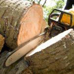 Намериха контрабандна дървесина