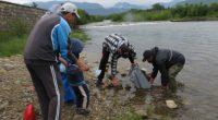 Общо 15 хил. рибки – балканска пъстърва, бяха пуснати на 17 юни, събота, в коритата на реките Бели Искър, Черни Искър, Бистрица и Искър. От местната администрация уточниха, че от […]