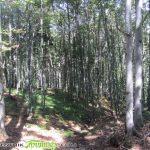 Ще приспособяват горите към климатичните промени